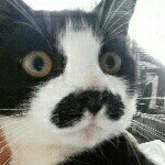 @meowstache_'s profile picture on influence.co