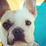@frenchie.helium's profile picture on influence.co
