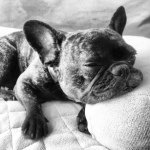 @ella_thefrenchie's profile picture on influence.co