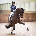 @dressagehorses__'s profile picture on influence.co