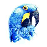 @birdloverksa2's profile picture on influence.co
