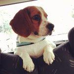 @ibiskinecesarebeagle's profile picture on influence.co