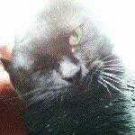 @elishagoodins's profile picture on influence.co