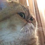 @gigi_solo's profile picture on influence.co