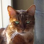 @copperthecat49's profile picture on influence.co