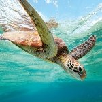@oceanwildlife's profile picture on influence.co