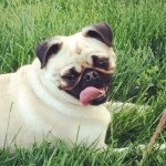 @baileypuglet's profile picture on influence.co