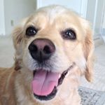 @daisybeardog's profile picture on influence.co