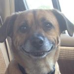 @meatballthechiweenie's profile picture on influence.co