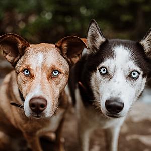@tuckerleo_da_huskies's profile picture on influence.co