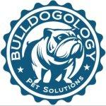 @bulldogology's profile picture