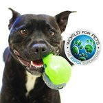 @rspcaworldforpets's profile picture
