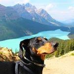 @dogfriendlytravel's profile picture