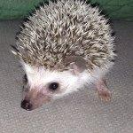 @muski_in_dubai's profile picture on influence.co