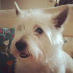 @bettythewestie's profile picture on influence.co