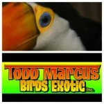 @toddmarcus_birdsexotic's profile picture on influence.co