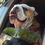 @simona_rembombori's profile picture on influence.co