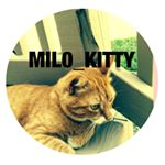 @mil0_kitty's profile picture on influence.co
