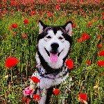 @wolfeyesinside's profile picture on influence.co