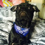 @chester_the_frug's profile picture on influence.co