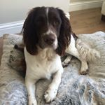 @maxspringerspaniel's profile picture on influence.co