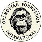 @orangutanfoundationintl's profile picture