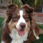 @nani_theredtriaussie's profile picture on influence.co
