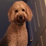 @sawyer_thedoodle's profile picture on influence.co