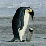 @_natgeo_wild_earth's profile picture on influence.co