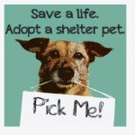 @petadoptrescue's profile picture on influence.co