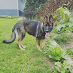@kaycee_the_gsd's profile picture on influence.co