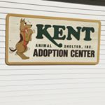 @kent_animal_shelter's profile picture on influence.co