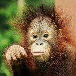 @sabahtourism's profile picture