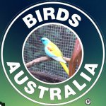 @birds_australia's profile picture on influence.co