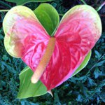 @loveverywhere's profile picture on influence.co
