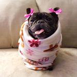 @3bulldoggesapparel's profile picture