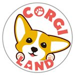 @thecorgiland's profile picture on influence.co
