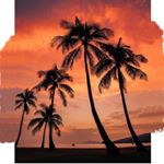 @visit.hawaii's profile picture