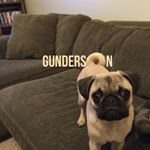 @gundersonthepug's Profile Picture