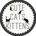 @cutecatskittens's profile picture
