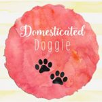 @domesticateddoggie's profile picture