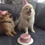 @nala_minnie.fox_bandit's profile picture on influence.co