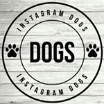 @dogs.4u's profile picture on influence.co