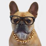 @abbythefrenchiegirl's profile picture on influence.co