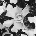 @dos_gardenias's profile picture