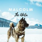 @malcolm_the_akita's profile picture on influence.co