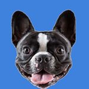 @stellathefrenchiebebe's profile picture on influence.co