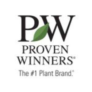 @provenwinners's profile picture