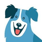 @gooddoginabox's profile picture on influence.co