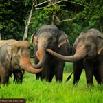 @elephanthills_thailand's profile picture